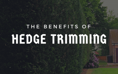 The Benefits of Hedge Trimming