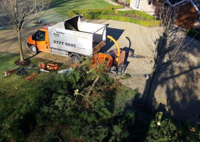 Beginning Tree Removal 07-02-2018