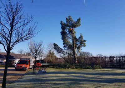 Beginning Tree Removal 2 07-02-2018