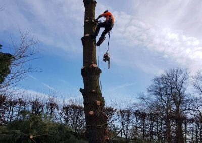 Less of a Tree at Tree Removal 07-02-2018