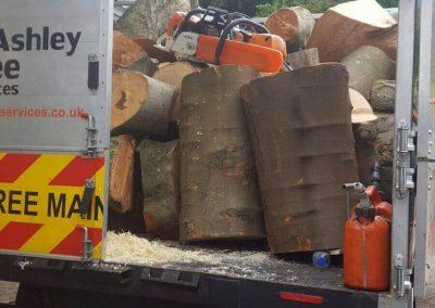 tree surgery tree logs removal