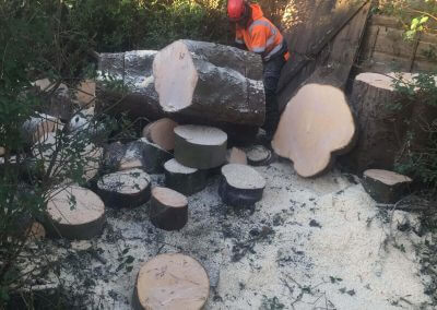 01122017 Sycamore Tree Removal Swinton Cutting Logs 2