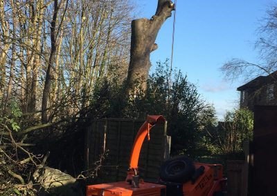 01122017 Sycamore Tree Removal Swinton With Chipper