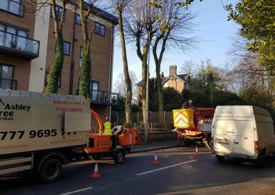 Tree Pollarding in Knutsford Manchester begin