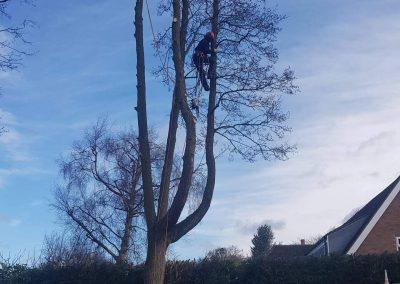23032018 Tree Removal Knutsford 2
