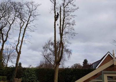 23032018 Tree Removal Knutsford