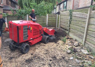 Large Sycamore Tree Felling and Stump Removal Chorlton, Manchester – 25.07.2017.