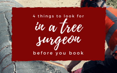 4 things to look for in a tree surgeon, before you book
