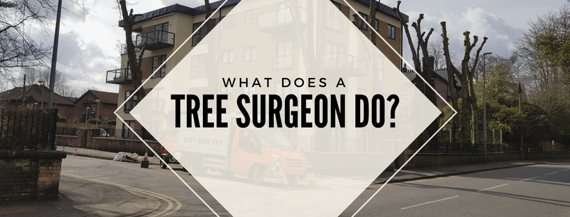 What does a tree surgeon do?