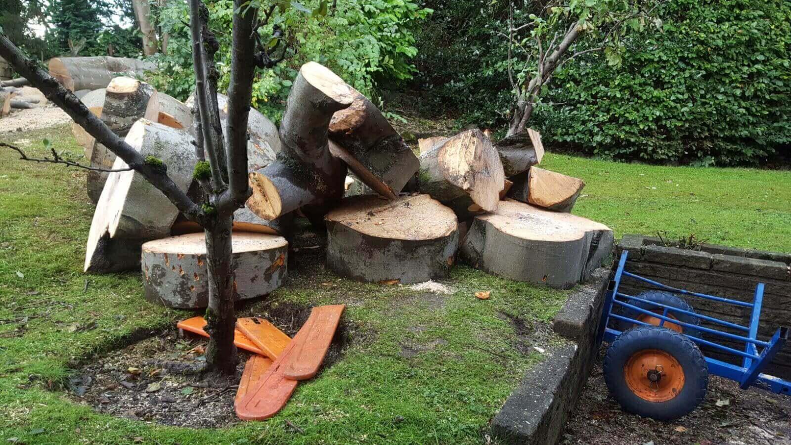 Beech Tree Removal Prestwich 11