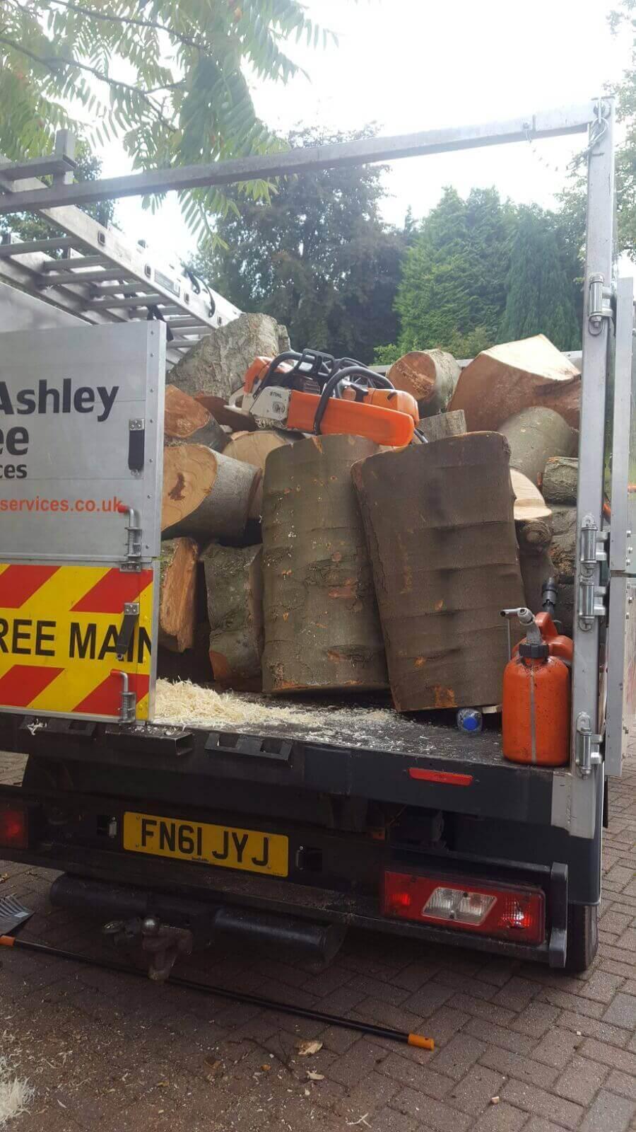 Beech Tree Removal Prestwich 13