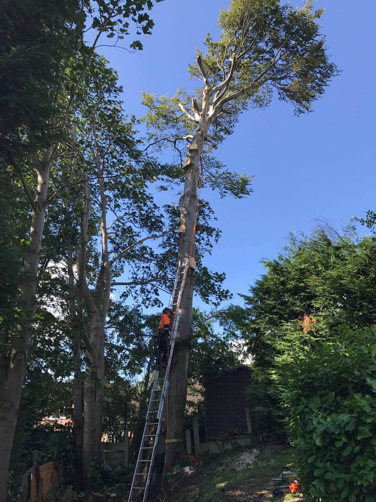 Beech Tree Removal Prestwich 4