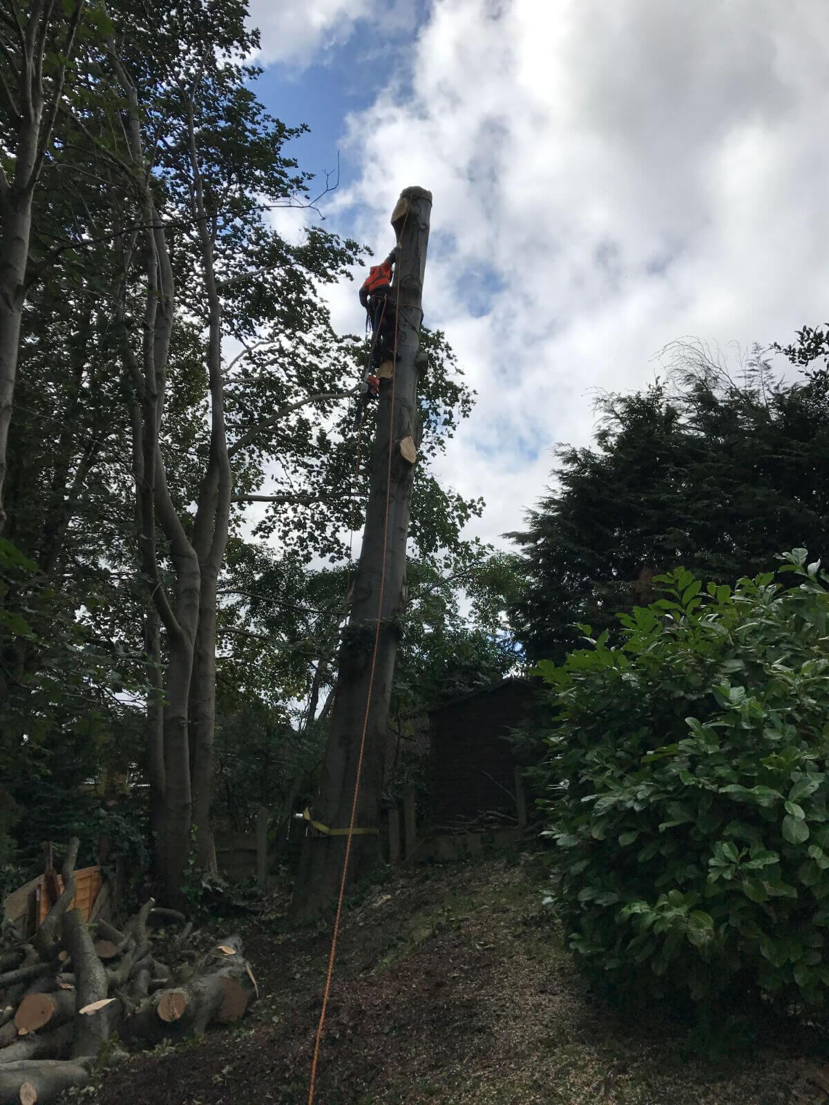 Beech Tree Removal Prestwich 5