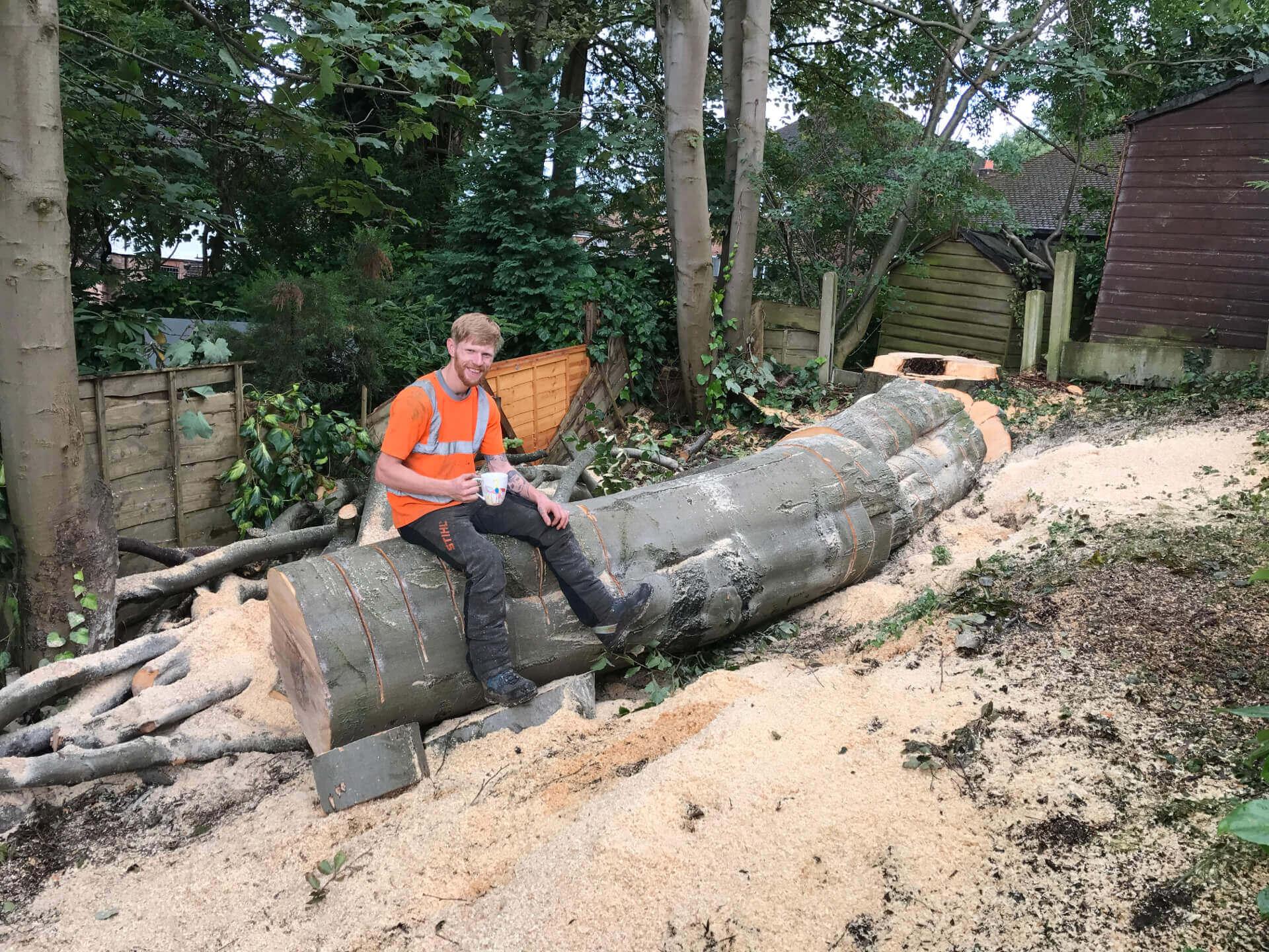 Beech Tree Removal Prestwich 6