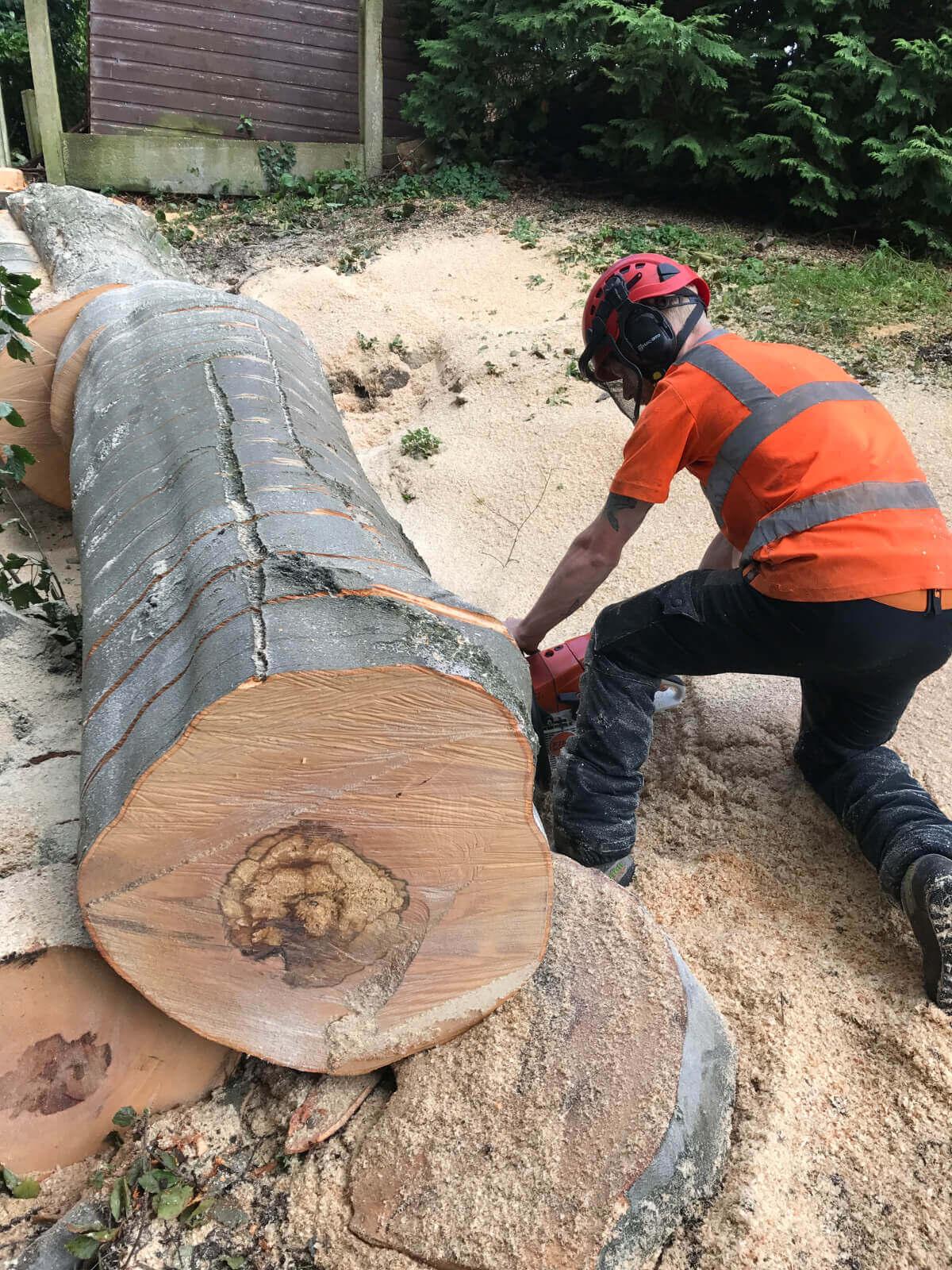 Beech Tree Removal Prestwich 8