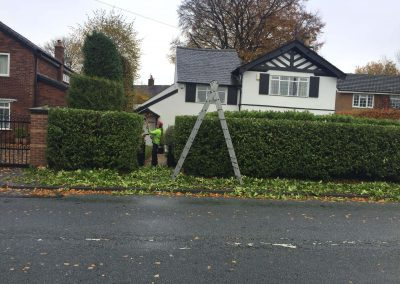 Hedge Cutting Hale, Altrincham – 16.11.2017.