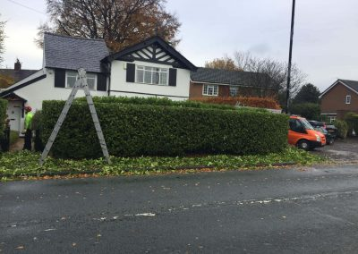 Hedge Cutting Hale 3