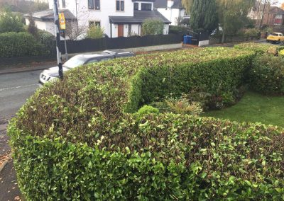 Hedge Cutting Hale 4