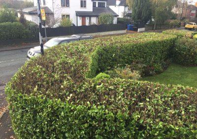 Hedge Cutting Hale 4