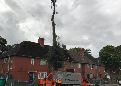 Lime Tree Removal Didsbury 1