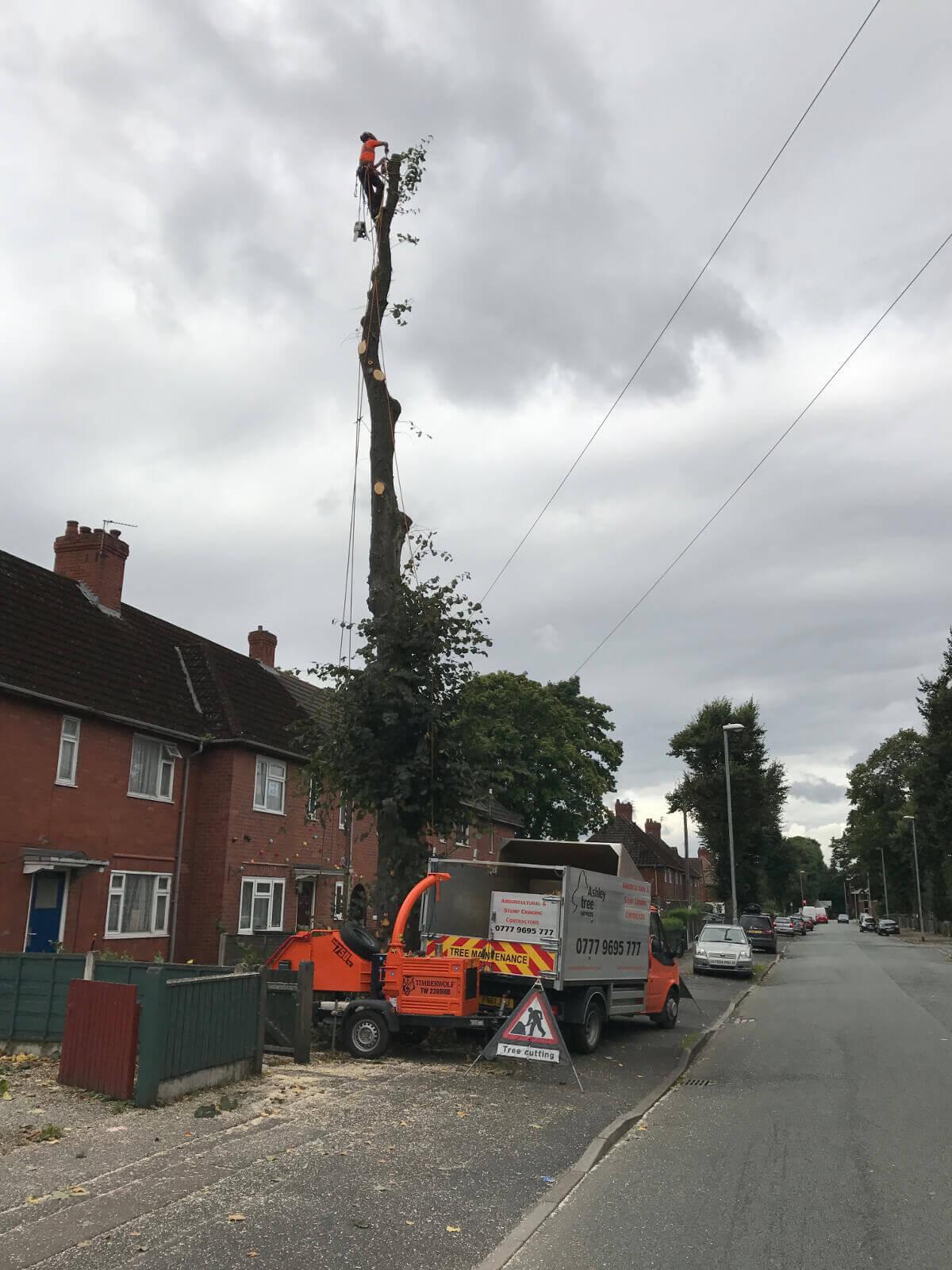 Lime Tree Removal Didsbury 2