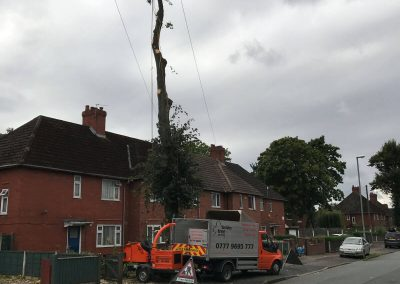 Lime Tree Removal Didsbury 3