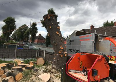 Lime Tree Removal Didsbury, Manchester – 24.08.2017.