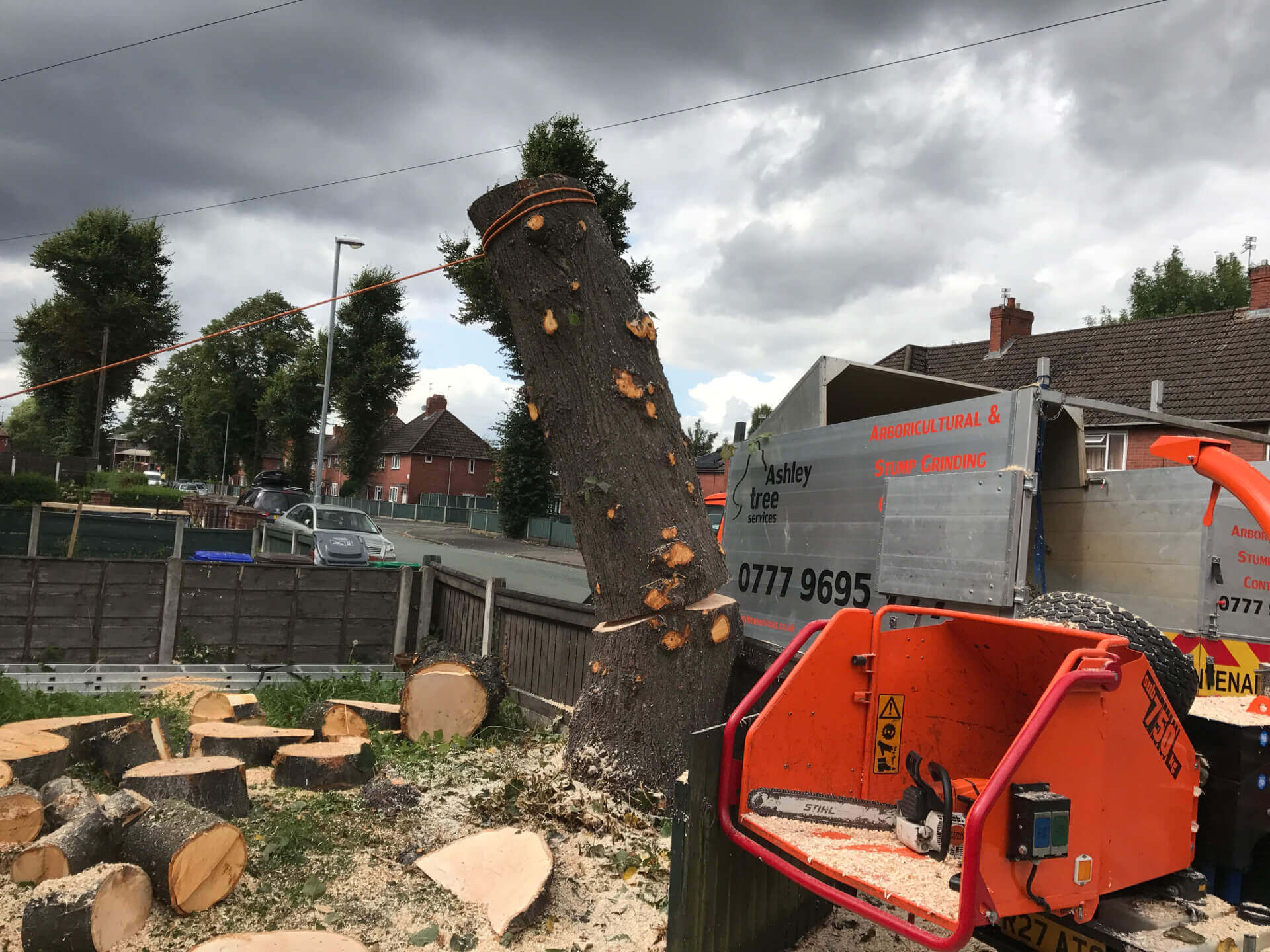 Lime Tree Removal Didsbury 4