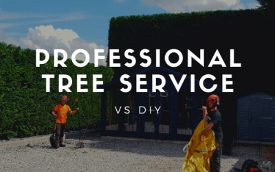 Should I hire professional tree service or do it myself?