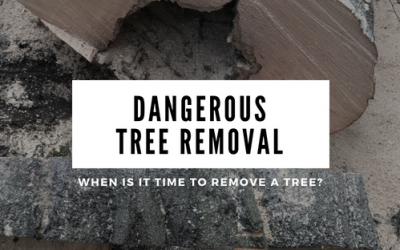 Dangerous Tree Removal: When is it time to remove a tree I'm worried about?