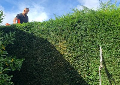 Yearly maintenance hedge trimming in Hale Barns Manchester – 17.09.2018.