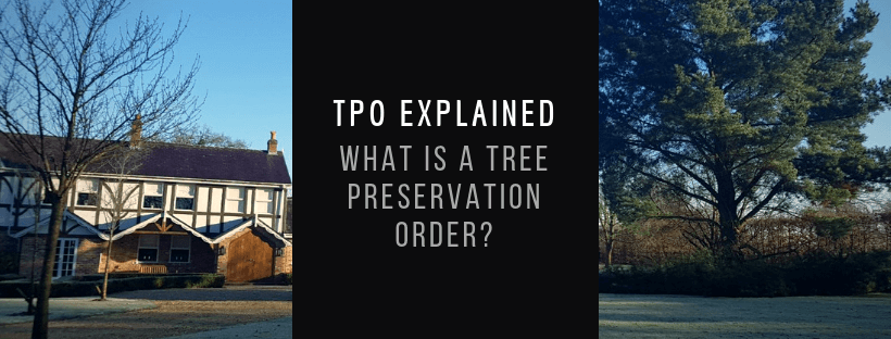 What is a Tree Preservation Order TPO