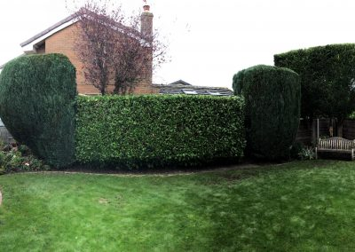 Hedge trimming Swinton Manchester – 24.10.2018.