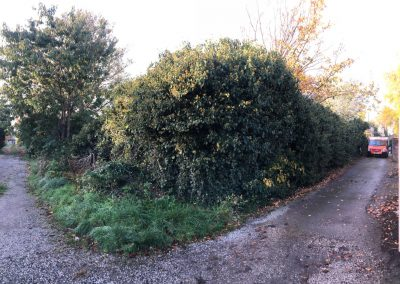 31102018 ivy cutback Worsley Manchester 1