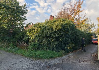 31102018 ivy cutback Worsley Manchester 2