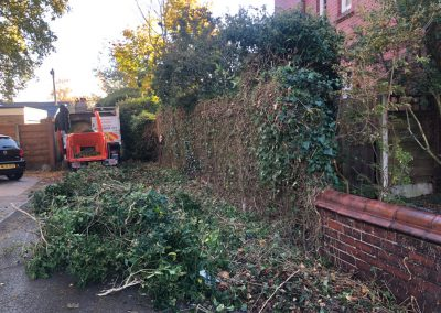 31102018 ivy cutback Worsley Manchester 5