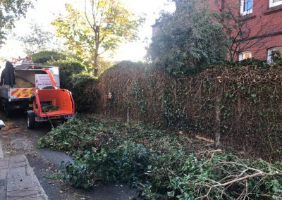 31102018 ivy cutback Worsley Manchester 6