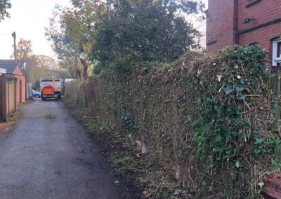 31102018 ivy cutback Worsley Manchester 8