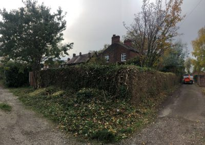31102018 ivy cutback Worsley Manchester 9