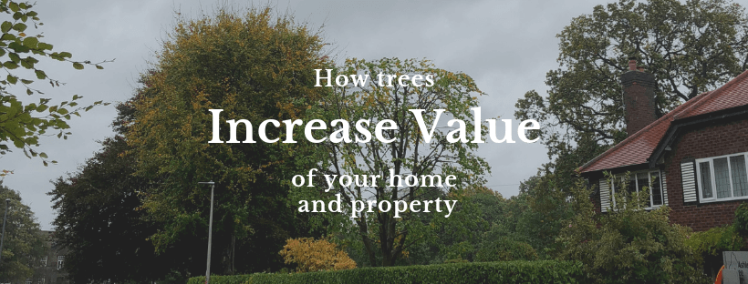 How Trees Increase Your Home and Property Value