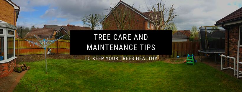 5 Simple Tree Care and Maintenance tips to keep your trees healthy