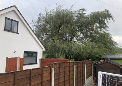 03112018 willow tree reduction Oldham Manchester 3
