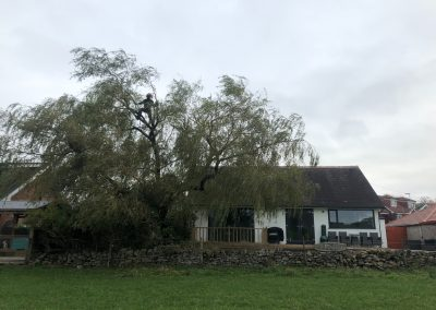 03112018 willow tree reduction Oldham Manchester 5