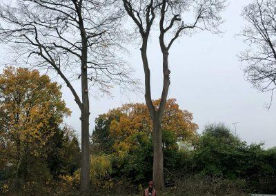 12112018 sycamore tree felling 1