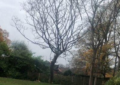12112018 sycamore tree felling 3