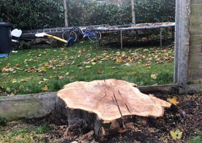 14112018 stump grinding Chorlton Manchester 1