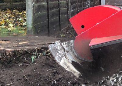 14112018 stump grinding Chorlton Manchester 4