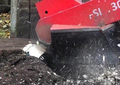 14112018 stump grinding Chorlton Manchester 5