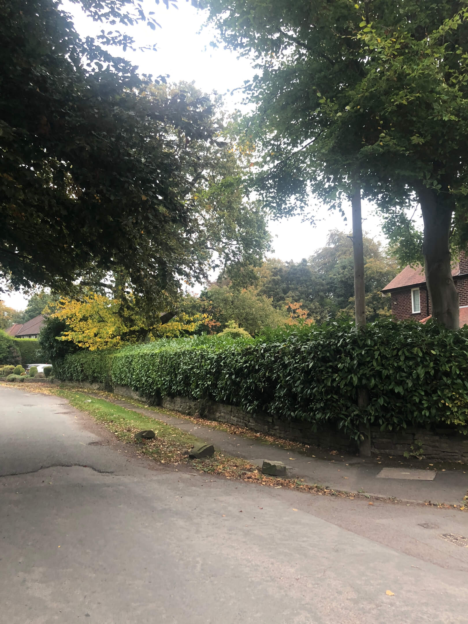 Hedge trimming and crown reducing Knutsford Cheshire 2