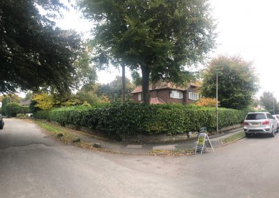 Hedge trimming and crown reducing Knutsford Cheshire 3
